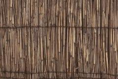 Oryginalny tło sucha trzcina Obraz Stock