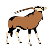 Oryks adult antelope color  profile Stock Images