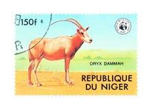 Oryx Immagine Stock