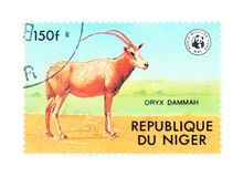 Oryx Stockbild