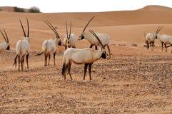 Animali della fauna selvatica Immagini Stock Libere da Diritti
