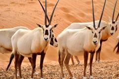 Animali della fauna selvatica Immagine Stock Libera da Diritti