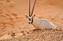 Animale della fauna selvatica Fotografia Stock