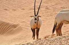 Animale della fauna selvatica Immagine Stock Libera da Diritti