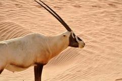Animale della fauna selvatica Immagini Stock Libere da Diritti
