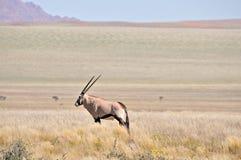 Oryx dans le paysage d'herbe et de montagne images stock