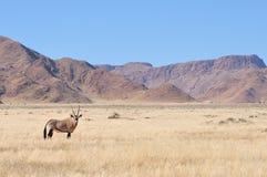 Oryx dans le paysage d'herbe et de montagne image stock