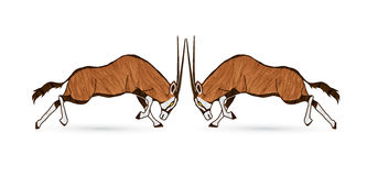 2 Oryx jumping to battle Stock Images