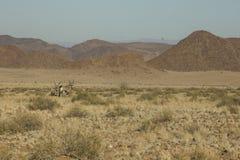 Oryx, Namibia Obraz Stock