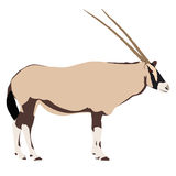 Oryx from side, drawn illustration Stock Photography