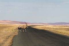 Oryx in the Sossusvlei desert, Namibia Royalty Free Stock Photography