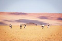 Oryx w pustyni Zdjęcie Stock