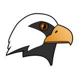 orzeł Głowa ptak zdobycz Zdjęcie Royalty Free