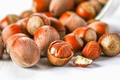 Orzechów włoskich hazelnuts rozpraszali na białym drewnianym stole fotografia stock