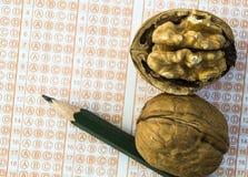 Orzechów włoskich karmowi egzaminy otwierają mądrość, orzechy włoscy ulepszają mózg i postęp inteligencja, ucznie regularnie je o fotografia royalty free