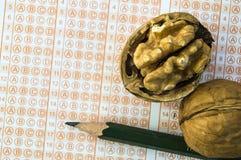 Orzechów włoskich karmowi egzaminy otwierają mądrość, orzechy włoscy ulepszają mózg i postęp inteligencja, ucznie regularnie je o obraz royalty free