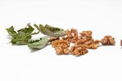 Orzechów włoskich liście na bielu i nasiona zdjęcie royalty free