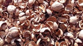 Orzecha włoskiego nutshell naturalny suchy owocowy tło Fotografia Royalty Free