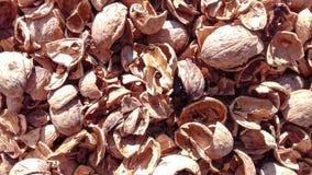 Orzecha włoskiego nutshell naturalny suchy owocowy tło Zdjęcia Royalty Free