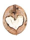 Orzecha włoskiego serce Fotografia Stock