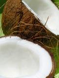 orzechy kokosowe Obraz Stock