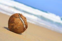 orzechy kokosowe Zdjęcia Royalty Free