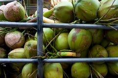 orzechy kokosowe Obraz Royalty Free