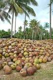 orzechy kokosowe Zdjęcie Stock