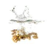 Orzechy włoscy bryzgają na wodzie, odosobnionej na białym tle Obrazy Stock