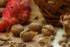 Orzechy włoscy, hazelnuts i obrazy stock