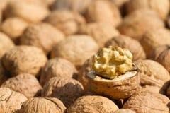 Orzechy włoscy owocowi Fotografia Stock