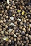 Orzechy włoscy z żółtymi liśćmi Fotografia Stock