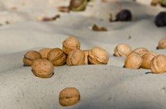 Orzechy włoscy na piasku Fotografia Stock