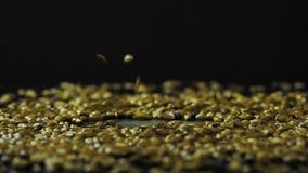 Orzo caramellato per la fabbricazione delle cadute scure della birra di Kraft su una superficie di vetro nera Fps del movimento l stock footage