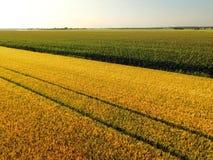 Orzo dorato di vista aerea e campi di grano verdi Fotografie Stock Libere da Diritti