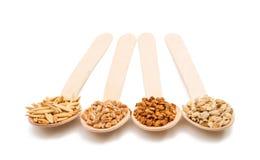 Orzo, grano, grano saraceno, chicchi dell'avena in un cucchiaio di legno isolato Fotografia Stock Libera da Diritti