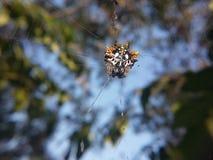 Osłona kształtny pająk zdjęcie stock