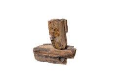 Osłupiałego drewna odosobniony tło Obrazy Royalty Free