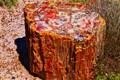 Osłupiały Drewniany nazwa użytkownika las państwowy Zdjęcie Royalty Free