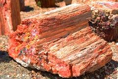 Osłupiały drewno obraz stock