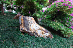 Osłupiały drewno Zdjęcie Stock