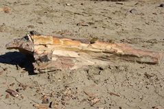 Osłupiały drewno w Patagonia Zdjęcia Royalty Free