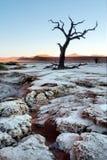 Osłupiały drzewo w pustyni Zdjęcie Stock