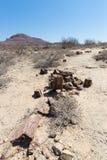Osłupiały i mineralizujący drzewny bagażnik w sławnym Osłupiałym Lasowym parku narodowym przy Khorixas, Namibia, Afryka 280 milio Zdjęcie Stock