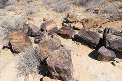 Osłupiały i mineralizujący drzewny bagażnik w sławnym Osłupiałym Lasowym parku narodowym przy Khorixas, Namibia, Afryka 280 milio Zdjęcia Royalty Free