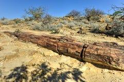 Osłupiały las, Namibia Fotografia Royalty Free