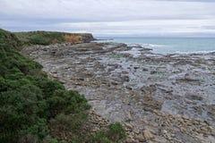 Osłupiały las przy Curio zatoką, Nowa Zelandia zdjęcia royalty free