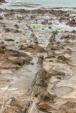 Osłupiały las w Curio zatoce fotografia stock