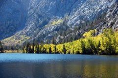 Os álamos tremedores aproximam o lago Fotografia de Stock