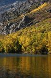 Os álamos tremedores aproximam o lago Fotos de Stock